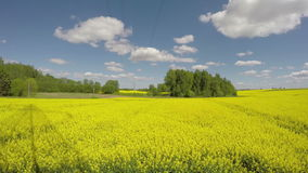 Beautiful rapeseed agriculture blossoming yellow field and clouds. Timelapse 4K stock video