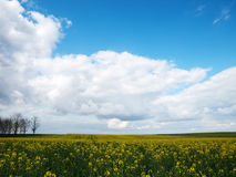 Beautiful rapeseed field Royalty Free Stock Photos