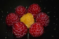 Beautiful raspberry with water drops royalty free stock images