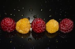 Beautiful raspberry with water drops royalty free stock image