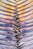 Beautiful Ravenala Pattern Background Stock Image