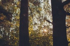 Beautiful rays of the sun Shine between the trees on a summer day. Green fairy forest with beautiful light from the sun royalty free stock photography