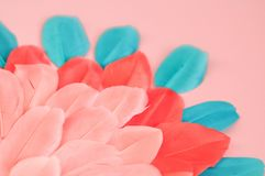 Beautiful Real feathers trend color living coral and blue on pink background closeup stock photo