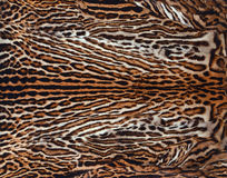 Beautiful real skin of leopard background Stock Photos