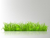 Beautiful realistic detailed fresh green grass, isolated on transparent background. Spring or summer object ready to use stock illustration