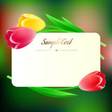 Beautiful rectangular greating card with spring flowers Stock Image
