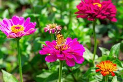 Beautiful red admiral butterfly sitting on a flower in spring garden.