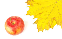 Beautiful red apple and maple leafs Stock Photos
