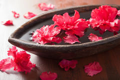 Beautiful red azalea flowers in wooden bowl for spa Stock Photography