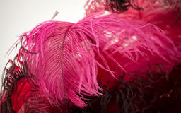 Beautiful red bird feathers as background Stock Photo