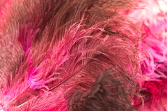 Beautiful red bird feathers as background Royalty Free Stock Photo