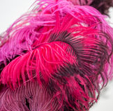 Beautiful red bird feathers as background Stock Images