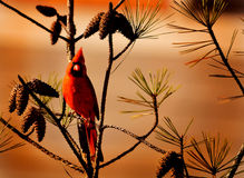 Beautiful red bird sitting on the branch. Royalty Free Stock Image