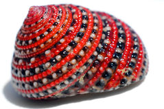 Beautiful red-black-white crab shell Royalty Free Stock Photos