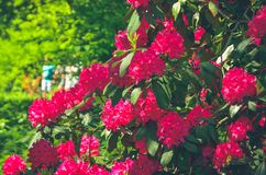 Spring natural flowers. royalty free stock photo