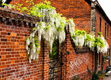 Beautiful red brick wall Stock Images