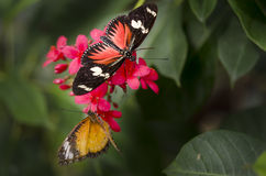 Beautiful red butterfly in nature Spring is here Stock Photography
