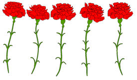 Beautiful red carnation isolated Vector 1 Royalty Free Stock Photography