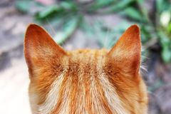 Beautiful red cat close up. Back view.  stock images