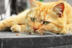 Beautiful red cat close-up. The cat lies on the table.  royalty free stock photos