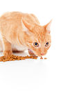 Beautiful red cat eats feed insulated Stock Photography