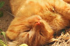 Beautiful red cat lying on the street. Cat close up.  royalty free stock photography