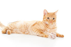 Beautiful red cat playing with a ball of yarn Stock Photo