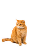 Beautiful red cat Royalty Free Stock Images
