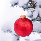Beautiful Red Christmas Ball on the Fir Branch Covered with Snow Stock Photography