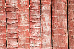 Beautiful red coconut wall Stock Images
