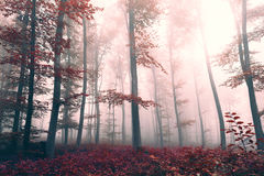 Beautiful red colored foggy forest landscape Stock Photography