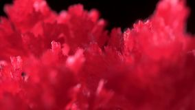 Beautiful red crystals appeared as a result of a home experience with chemicals. The crystallization process took place. Under normal conditions. Simple stock footage