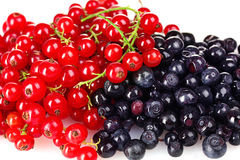 Beautiful red currant and blueberry Royalty Free Stock Image