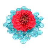 Beautiful Red Dahlia with Blue Glass Stones Isolated on White Background Stock Photos