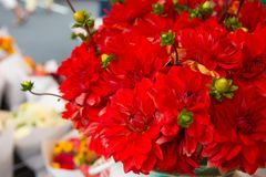 Beautiful Dahlia bouquet at the farmers market. Stock Image