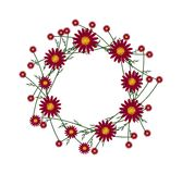 Beautiful Red Daisy Wreath on White Background Stock Images