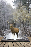 Beautiful red deer stag in snow covered festive season Winter forest landscape concept coming out of pages in open book stock photography