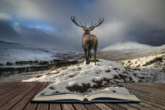Beautiful red deer stag in snow covered mountain range festive s Royalty Free Stock Photo