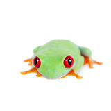 Beautiful red eyed tree frog on white background Stock Photos