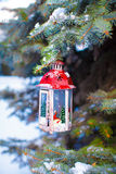 Beautiful red fairytale lantern hanging on snowy fir branch in forest Stock Image