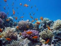 Beautiful fish in Red sea, Egypt stock photo