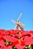 Beautiful red flowe Stock Image