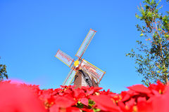 Beautiful red flowe windmill background Royalty Free Stock Images