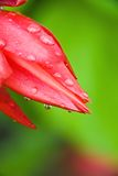 Beautiful red flower Stock Images