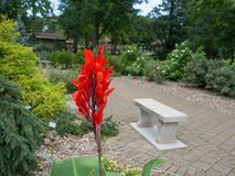 Beautiful Red Flower. By a Bench in the Columbus, Ohio Park of Roses stock image
