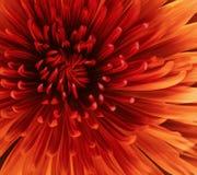 Beautiful red flower stock illustration