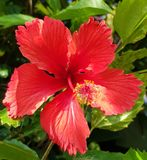 Flower. Beautiful red flower Royalty Free Stock Images
