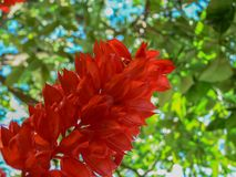 Beautiful red flower. In the garden Stock Photos