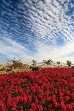 Beautiful red flower garden Stock Image