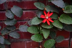 Beautiful Red flower royalty free stock images